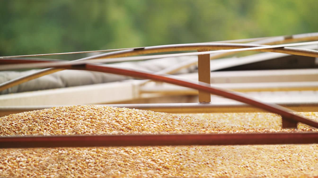 Bunge provient maïs et le transporte dans le monde entier.