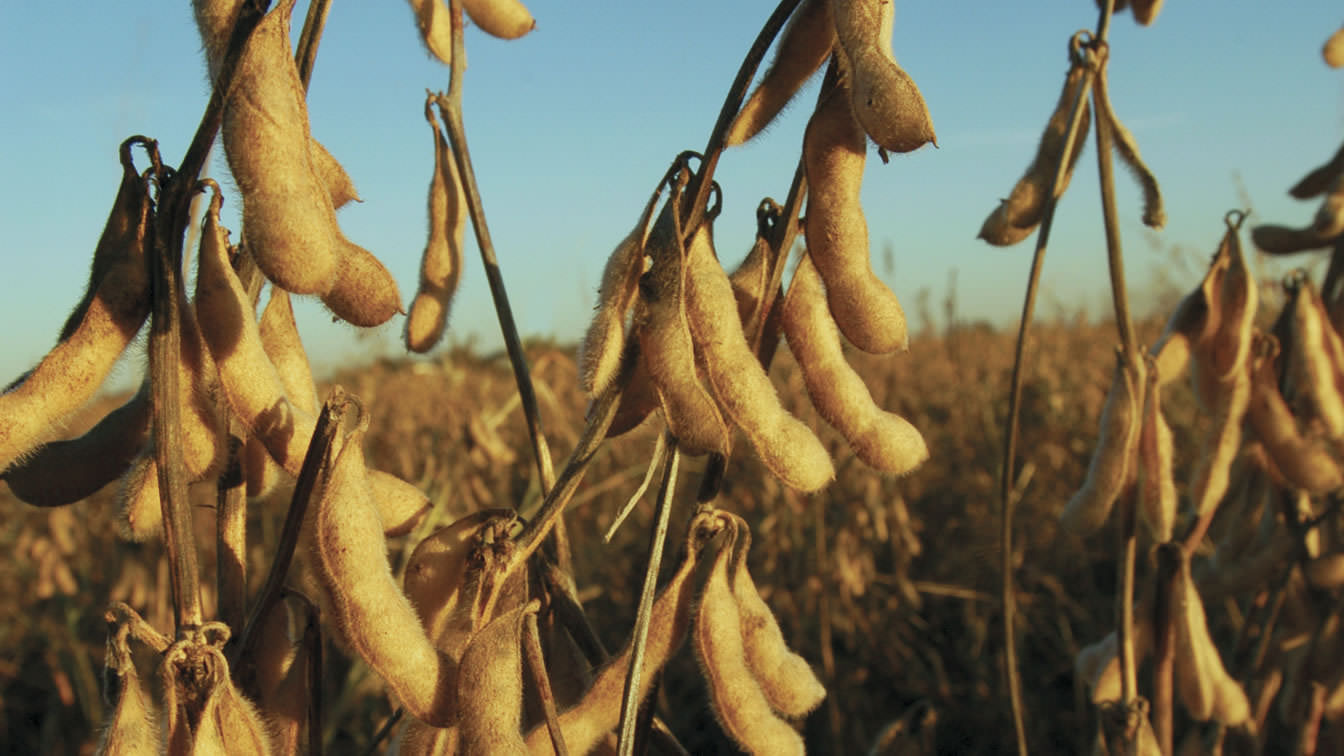Bunge is one of the leading soybean processors in North America.