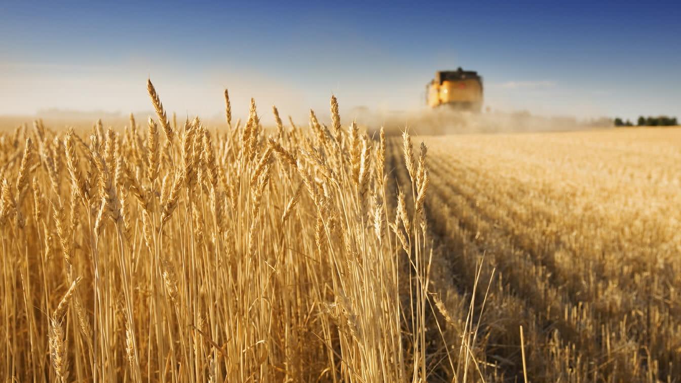 Bunge est un meunier de maïs, le riz et le blé.
