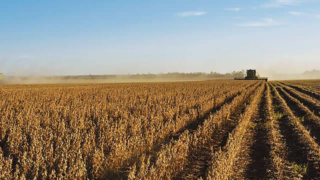 Origination des céréales